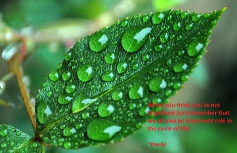 naoki circle of life quote